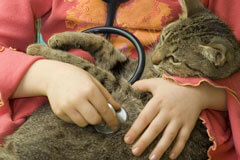 Exclusively Cats Veterinary Hospital, Waterford, MI - Feline Wellness Exam